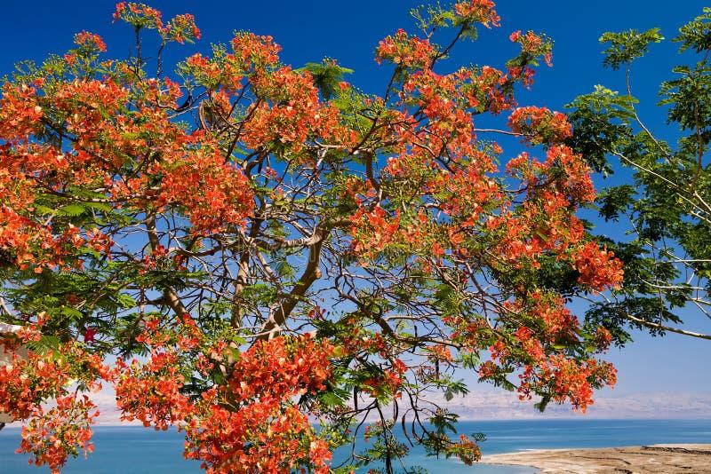Rode bloemen tegen blauwe hemel royalty-vrije stock afbeelding