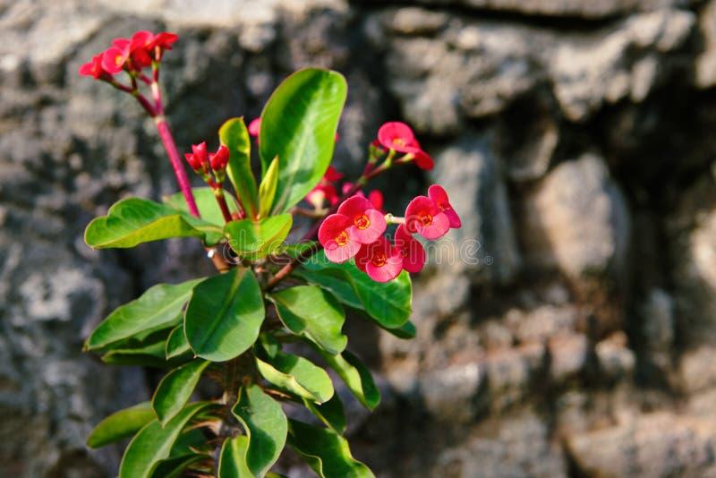 Rode bloemenbloei in de bergen royalty-vrije stock afbeeldingen