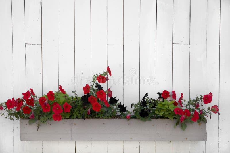 Rode Bloemmand op Witte Schuurmuur royalty-vrije stock foto's