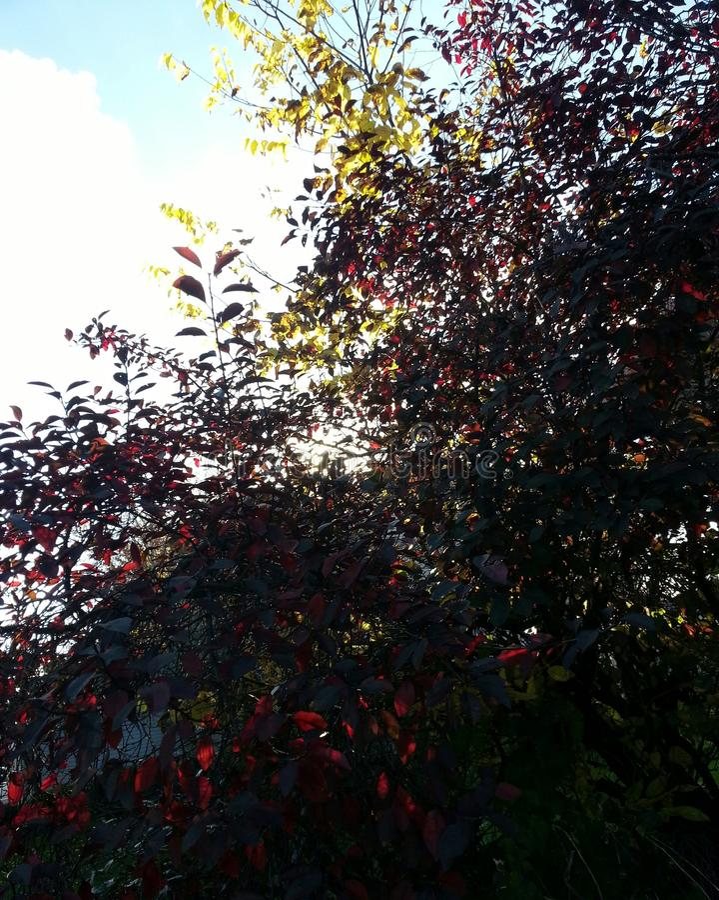 Rode bomen royalty-vrije stock foto's