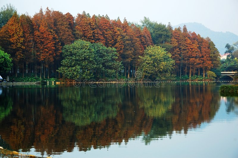 Rode bomen in de Herfst stock foto