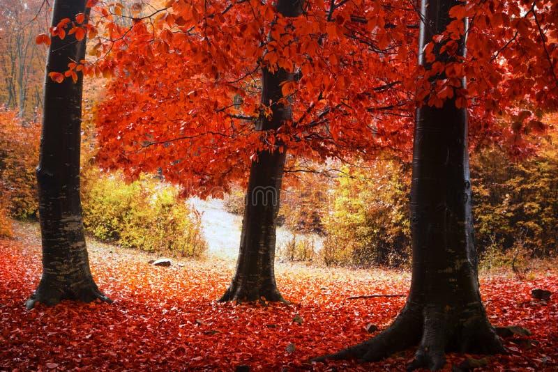 Rode bomen in het bos royalty-vrije stock foto's