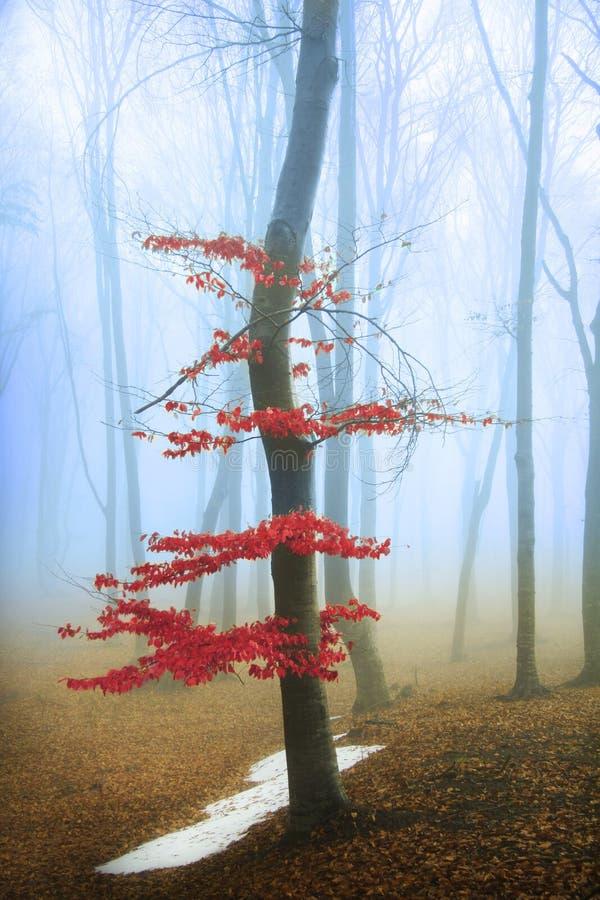 Rode boom in het bos stock foto's