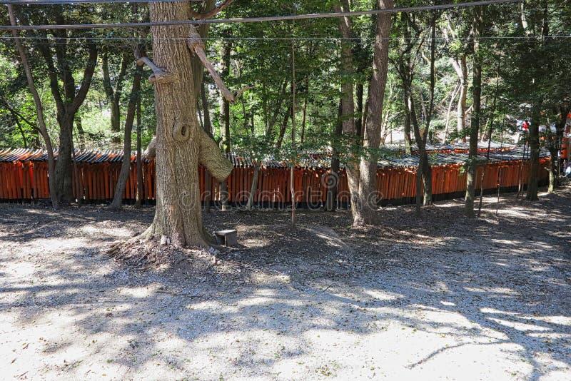 rode boomstammen in een park stock afbeeldingen