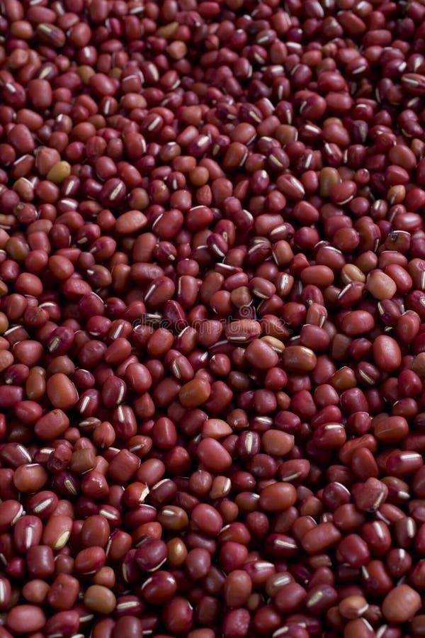 Rode boon stock afbeeldingen