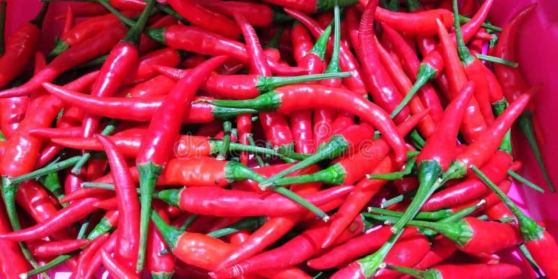 Rode chillis stock afbeelding