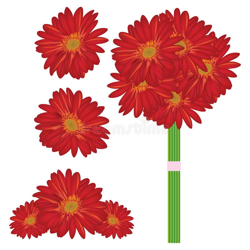 Rode Daisy vector illustratie