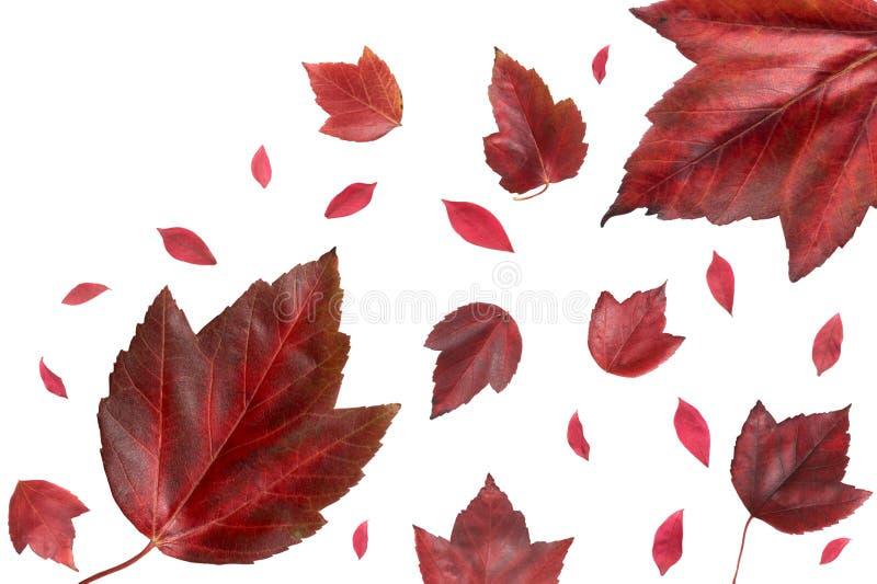 Rode dalingsbladeren stock afbeelding