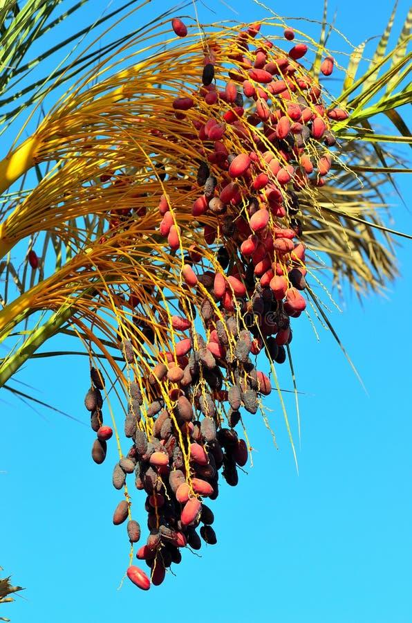 Rode data op een palm royalty-vrije stock foto's
