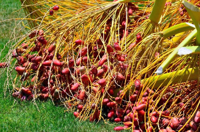 Rode data op een palm stock foto