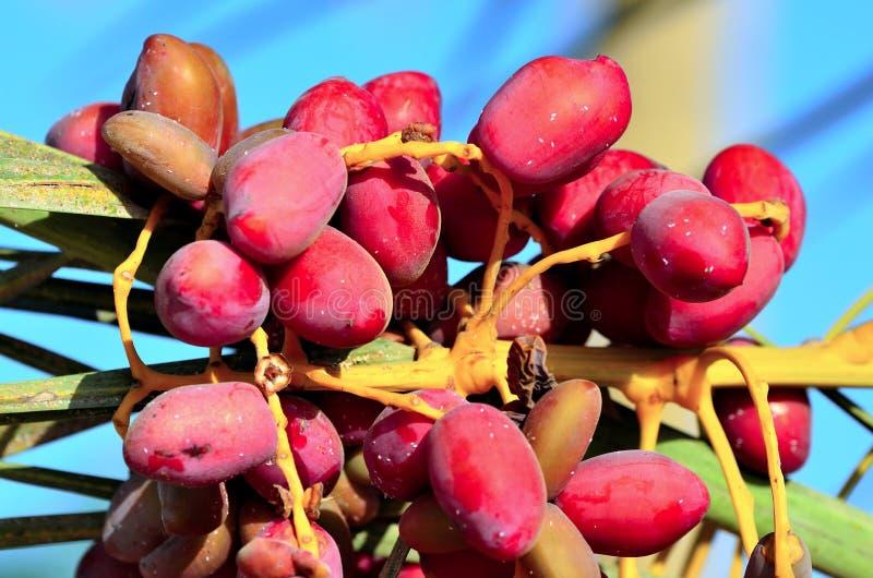 Rode data op een palm royalty-vrije stock afbeelding