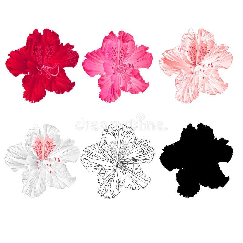 Rode de berg de struik van de bloemrododendron, roze, lichtrose, wit, schetst en silhouet op een witte uitstekende bloei als acht stock illustratie
