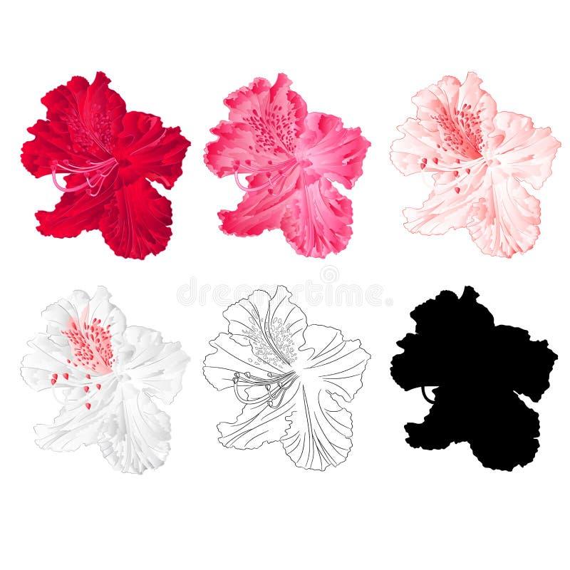 Rode de berg de struik van de bloemrododendron, roze, lichtrose, wit, schetst en silhouet op een witte uitstekende bloei als acht royalty-vrije illustratie