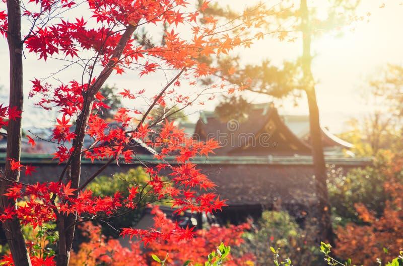 Rode de esdoornaard van Autumn Japan royalty-vrije stock foto