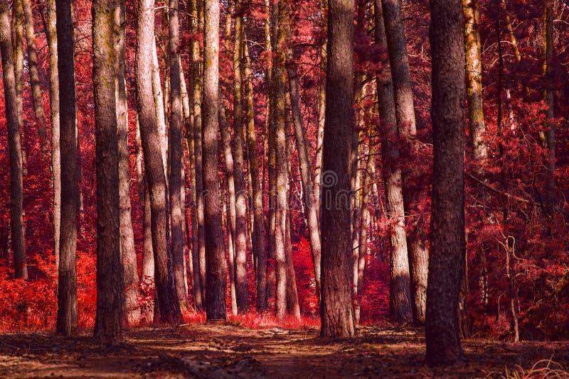 Rode de herfst bos vreselijk en spectaculair niemand rond royalty-vrije stock foto's