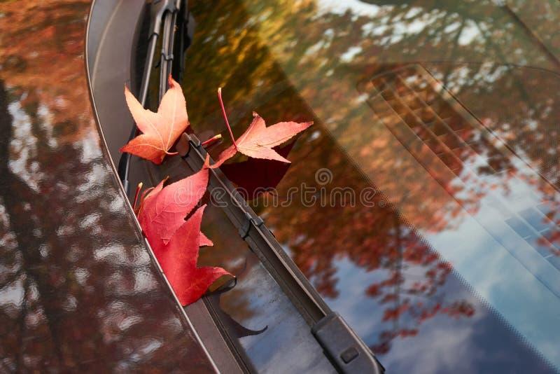 Rode de herfstbladeren op windscherm van een zwarte auto stock fotografie