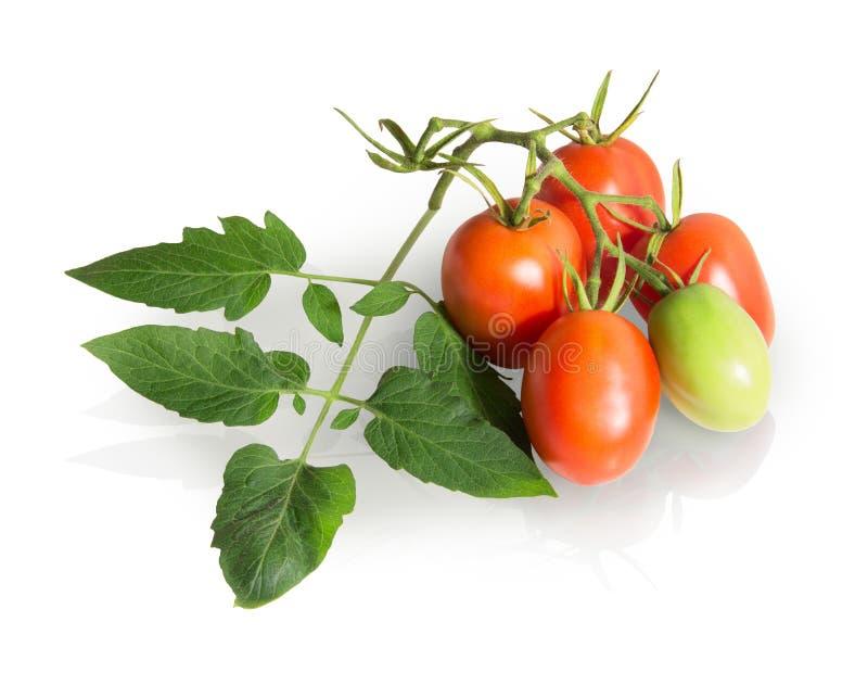 Rode die tomaten op wijnstok op witte achtergrond wordt geïsoleerd royalty-vrije stock afbeeldingen