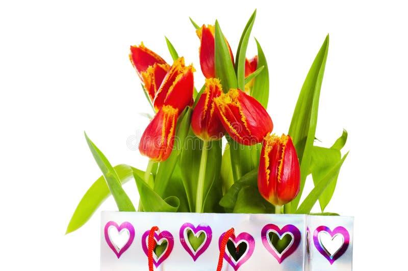 Rode die tulp met bloemblaadjes door geel worden omzoomd royalty-vrije stock fotografie