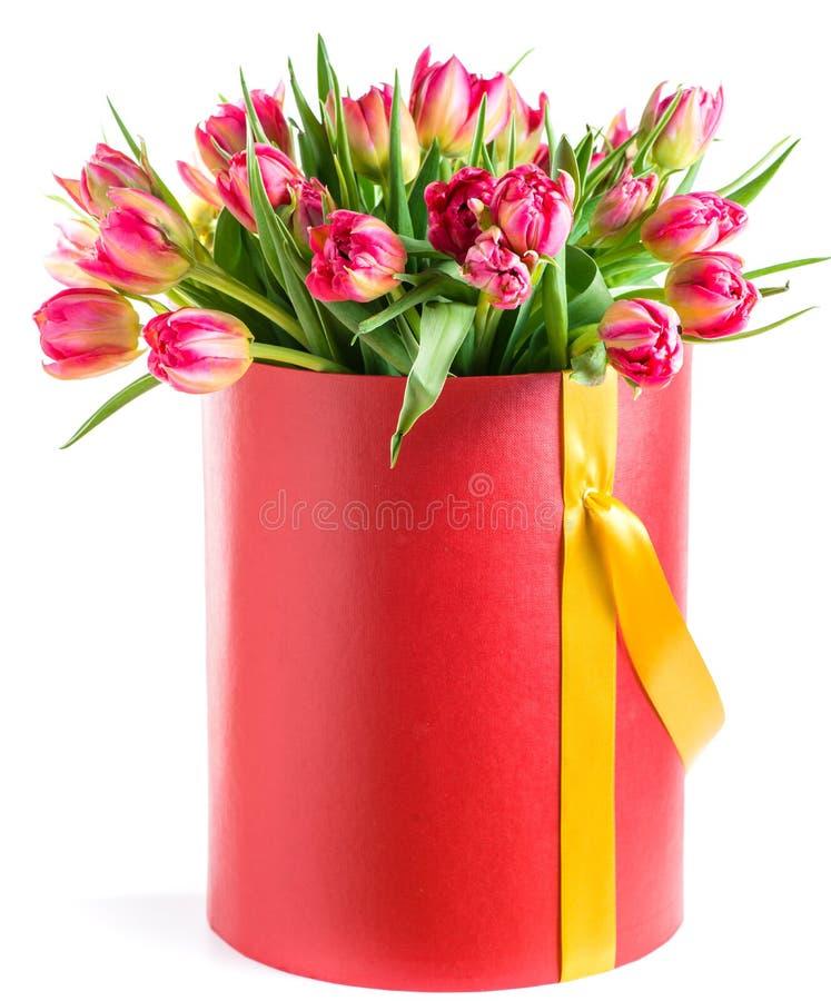 Rode die tulpen in een hoedendoos, op witte achtergrond wordt geïsoleerd royalty-vrije stock afbeeldingen
