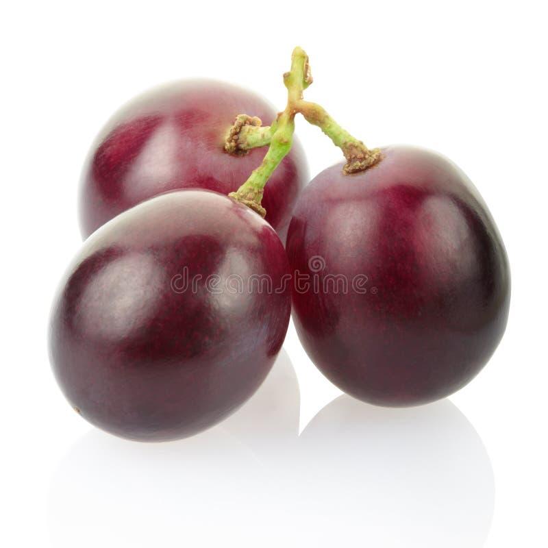 Rode druif stock foto