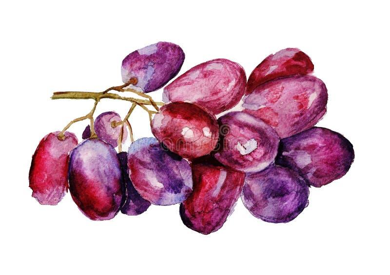 Rode druif royalty-vrije illustratie