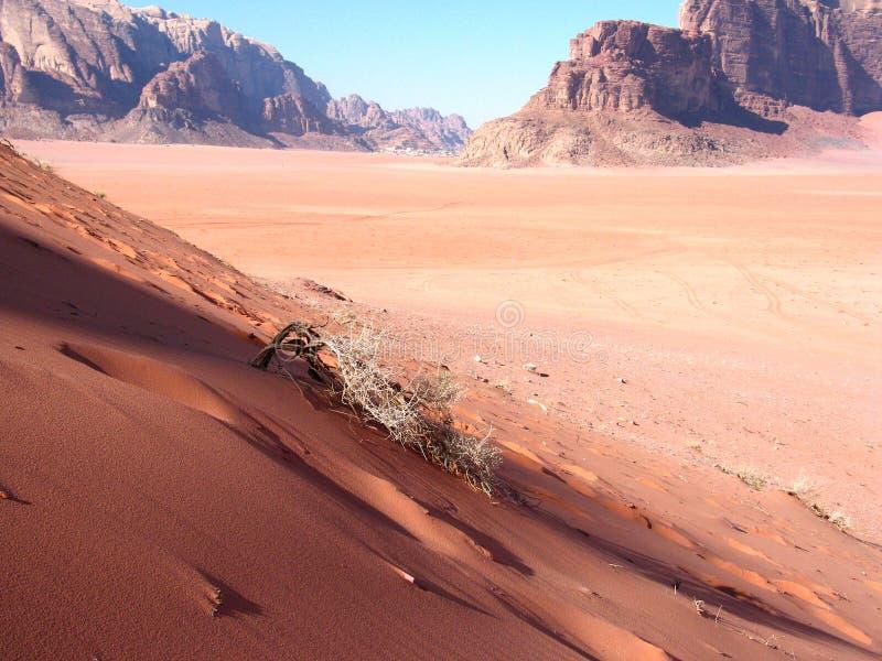 Rode duinen stock fotografie