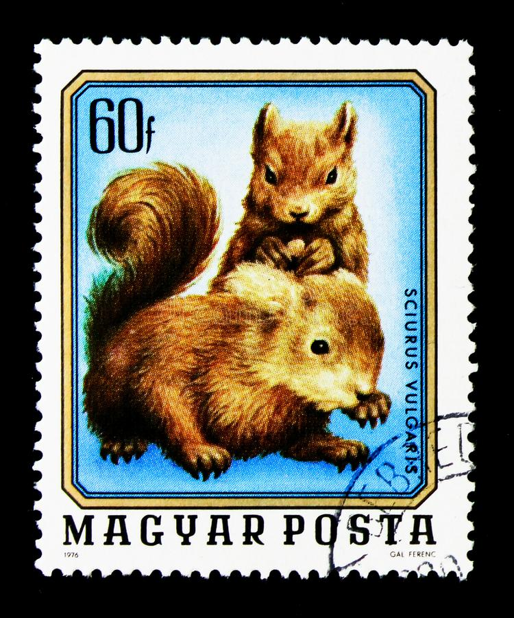 Rode Eekhoorn (vulgaris Sciurus), Jonge Dieren serie, circa 1976 stock foto