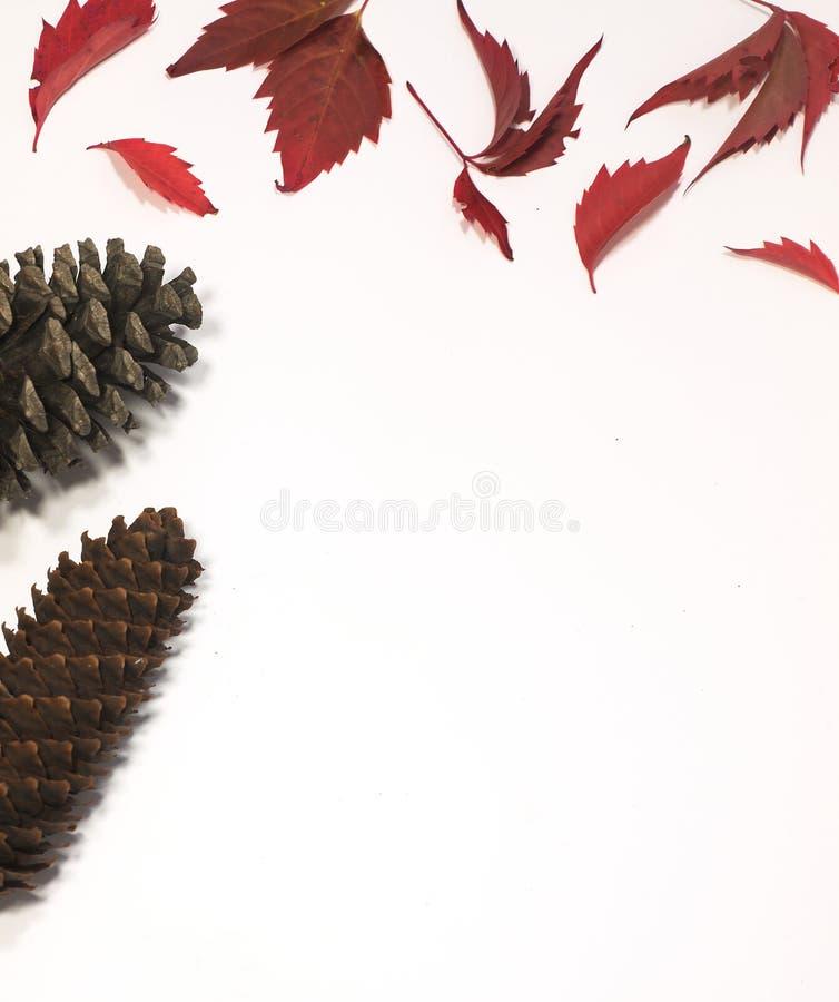 Rode en bruine herfstbladeren met kegels op witte achtergrond Vlakke lat Hoogste mening royalty-vrije stock afbeelding