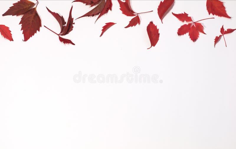 Rode en bruine herfstbladeren op witte achtergrond Vlak leg Hoogste mening stock afbeelding