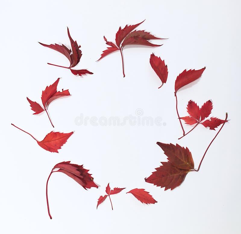 Rode en bruine herfstbladeren op witte achtergrond Vlak leg Hoogste mening Cirkel van bladeren royalty-vrije stock foto