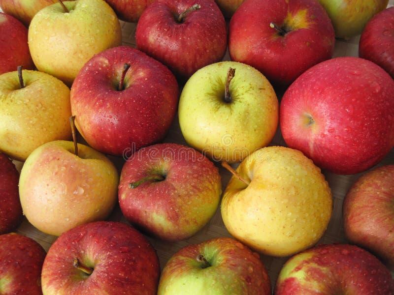 Rode en gele appelen royalty-vrije stock afbeeldingen