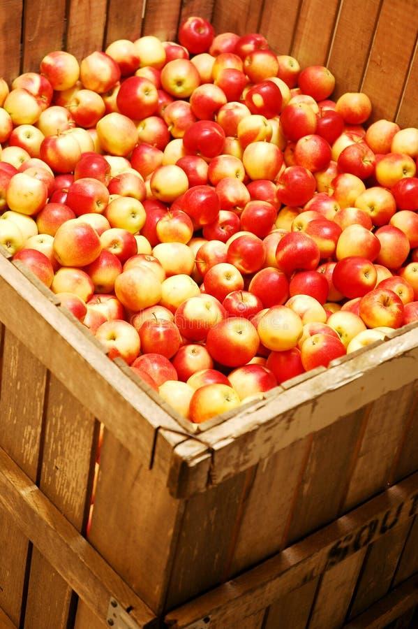 Rode en gele appelen stock fotografie