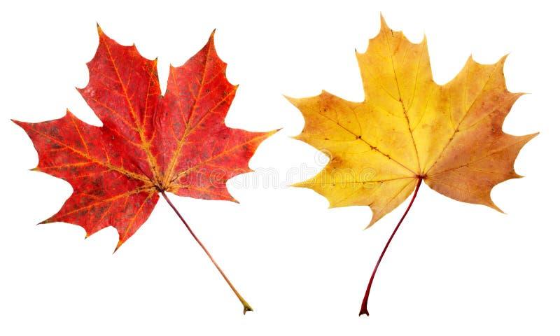Rode en gele bladeren royalty-vrije stock fotografie
