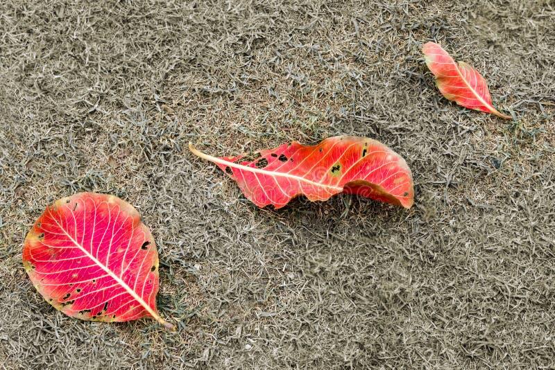 Rode en gele bladeren op grasveld royalty-vrije stock afbeeldingen