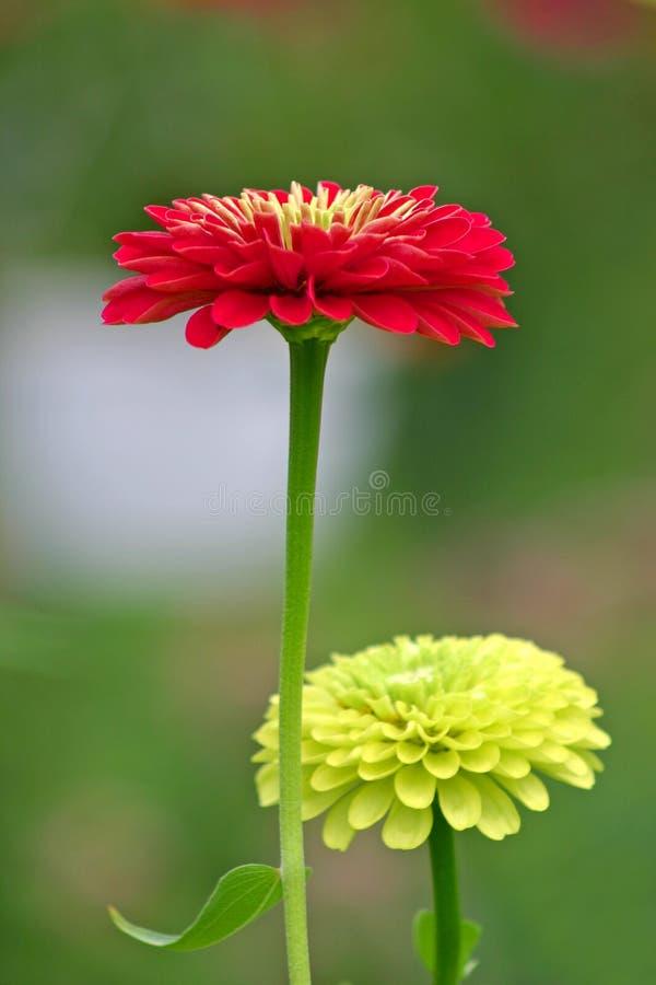 Rode en Gele Bloemen stock fotografie