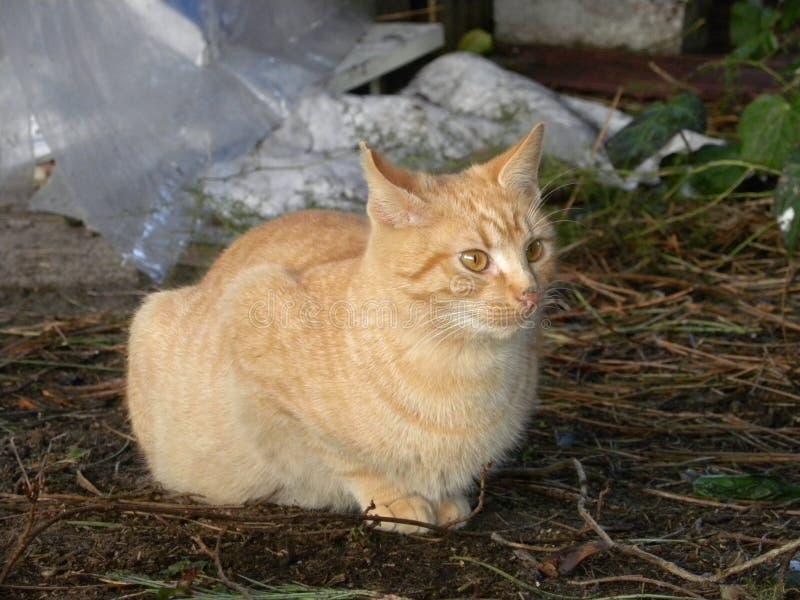 Rode en gele kat stock afbeeldingen