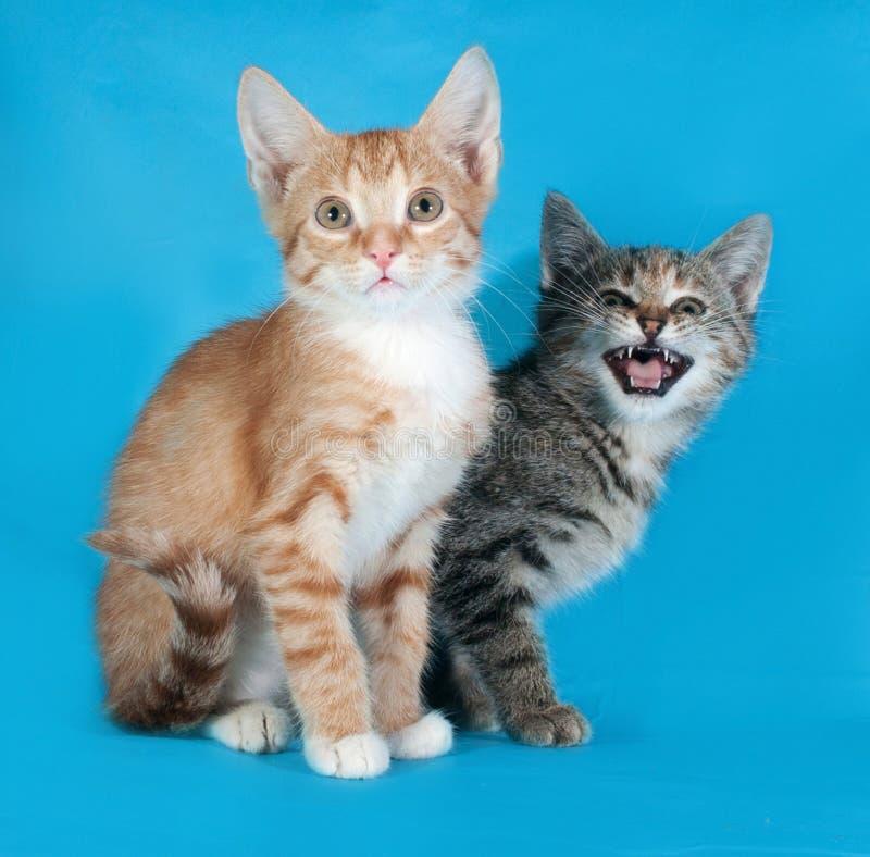 Rode en gestreepte katjeszitting op blauw en miauw royalty-vrije stock fotografie