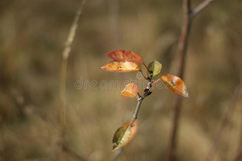 Rode en gouden bladeren royalty-vrije stock fotografie