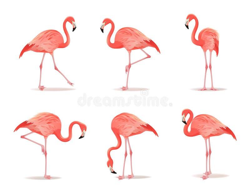 Rode en roze flamingoreeks, vectorillustratie De koele exotische vogel in verschillend stelt decoratieve ontwerpelementen royalty-vrije illustratie