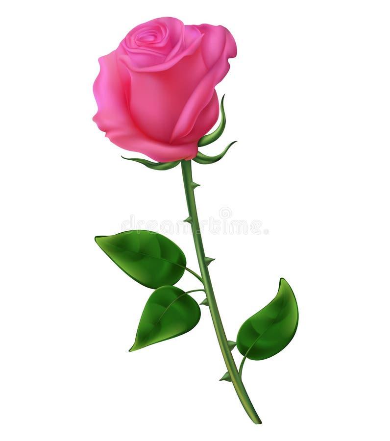 Rode en roze rozen, een lelie met knoppen en groene bladeren Realistische bloemen vector illustratie