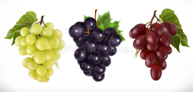 Rode en witte tafeldruiven, wijndruiven Drie kleurenpictogrammen op kartonmarkeringen stock illustratie