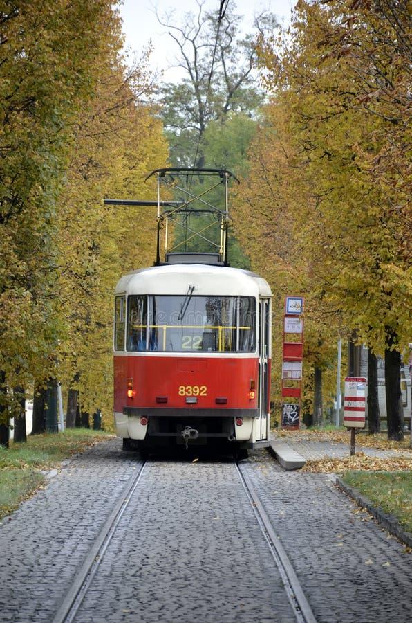 Rode en witte trambus van Praag stock foto