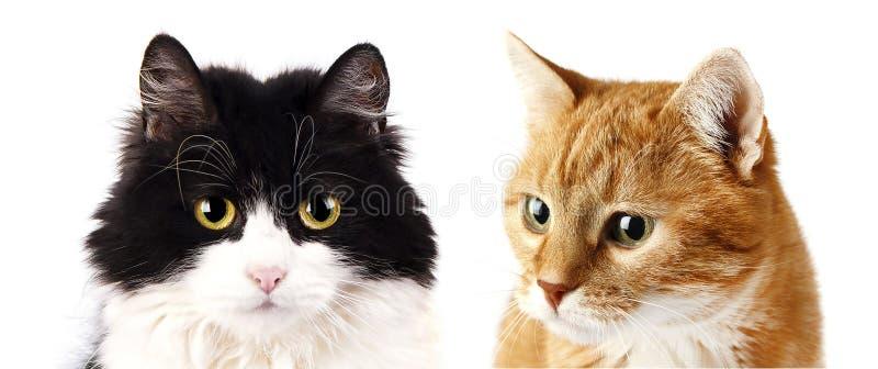 Rode en zwarte die kat op witte achtergrond wordt geïsoleerd royalty-vrije stock fotografie