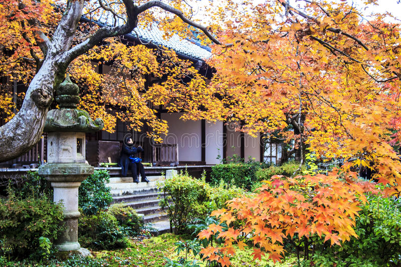 Rode esdoornbomen in een Japanse tuin royalty-vrije stock afbeelding