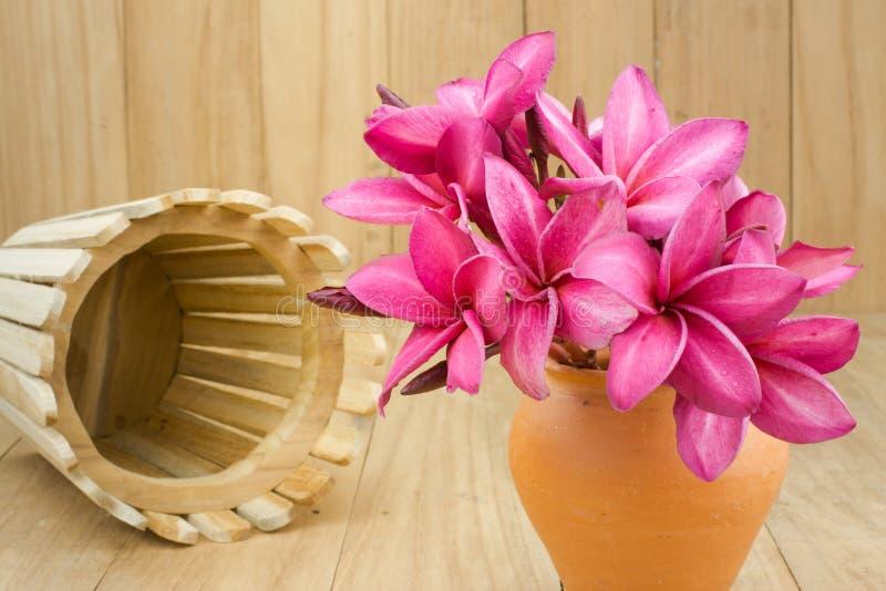 Rode frangipani (plumaria) bloem royalty-vrije stock foto's