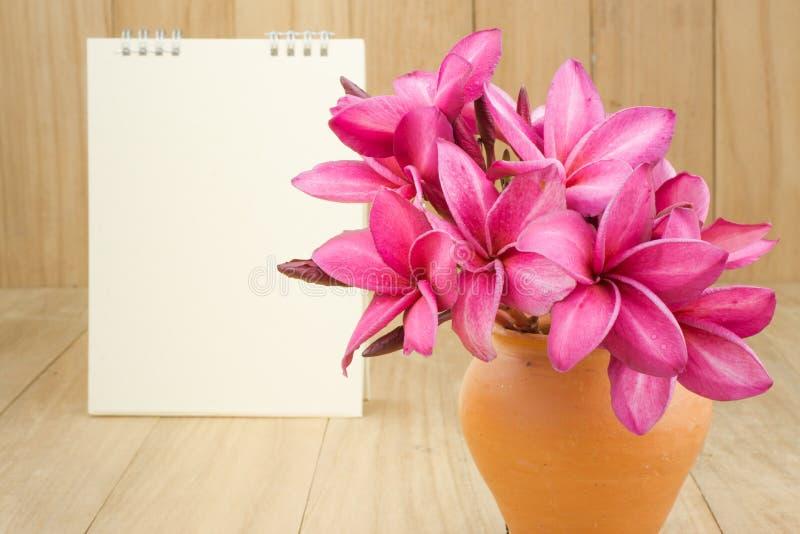 Rode frangipani (plumaria) bloem stock foto