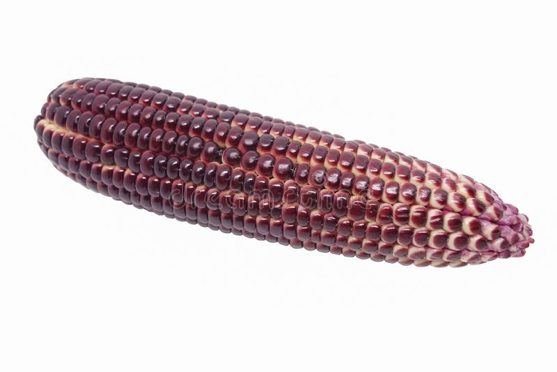 Rode geïsoleerde maïs royalty-vrije stock afbeelding