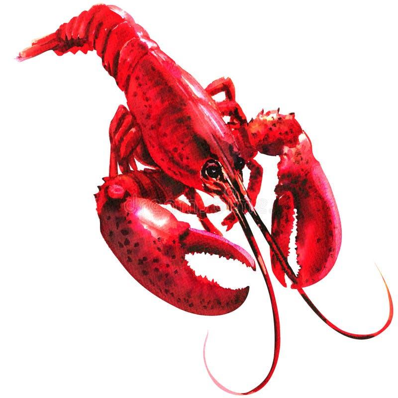Rode geïsoleerde zeekreeft, enig, gekookt, zeevruchten, waterverfillustratie op wit royalty-vrije stock afbeelding