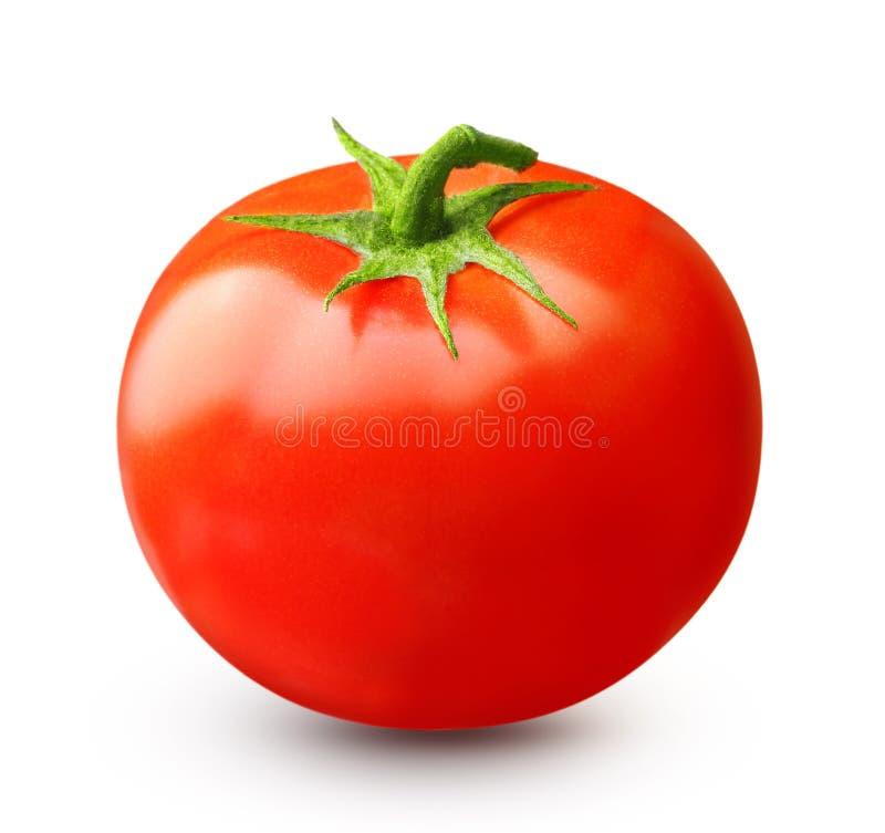 Rode geïsoleerdei tomaat stock afbeelding