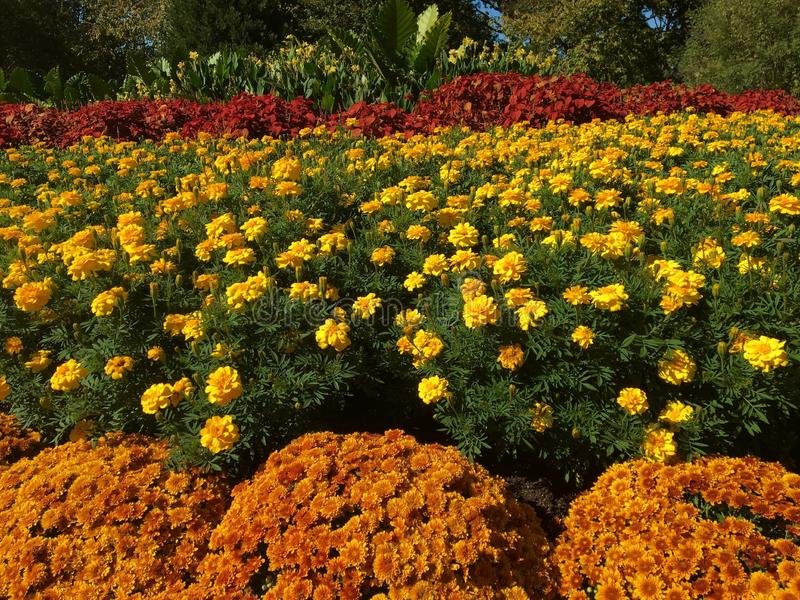 Rode geeloranje bloemen royalty-vrije stock foto